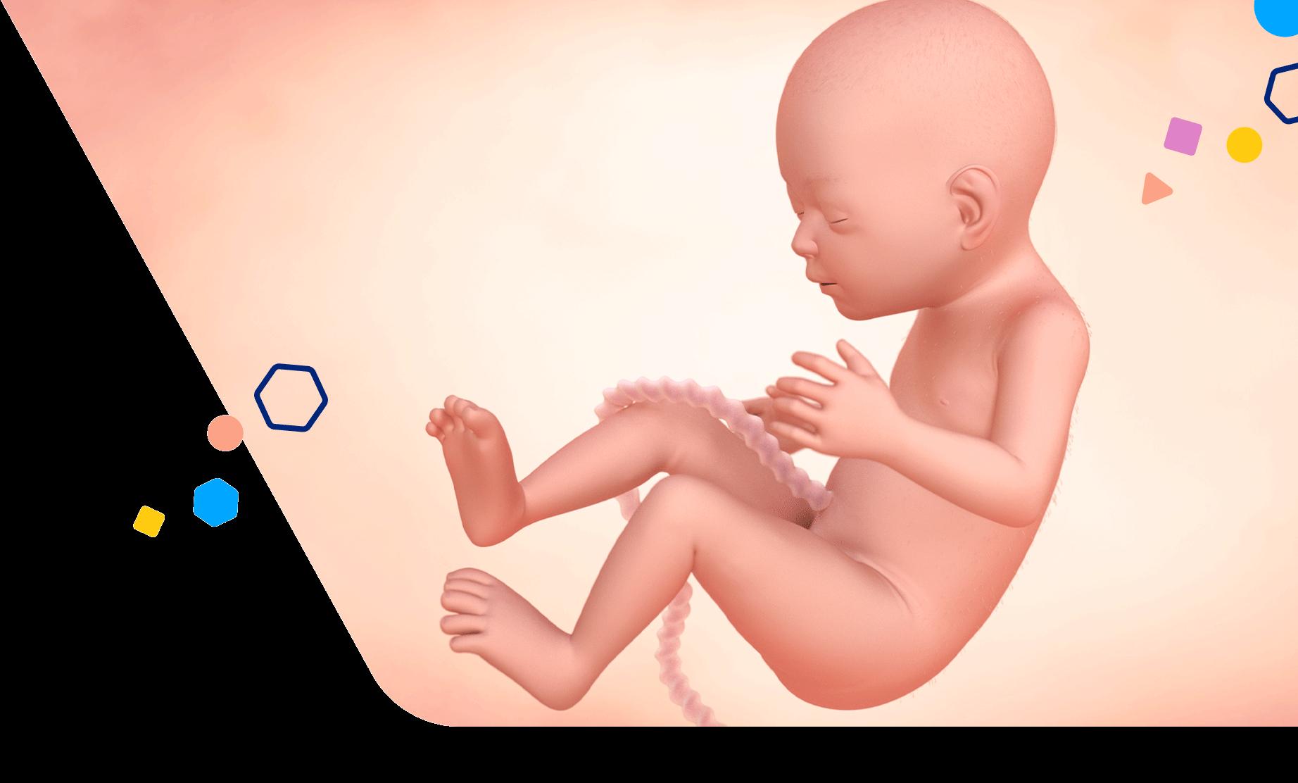 Mom Development 22 Weeks